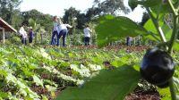 2_Curso_de_Agropecuária_envolve_técnicas_para_o_desenvolvimento_de_produção_vegetal_em_olericultura_culturas_sazonais_e_anuais
