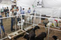 IFRO-COL-Rural-Sul-2019_Dia-04-Area-Animal_1
